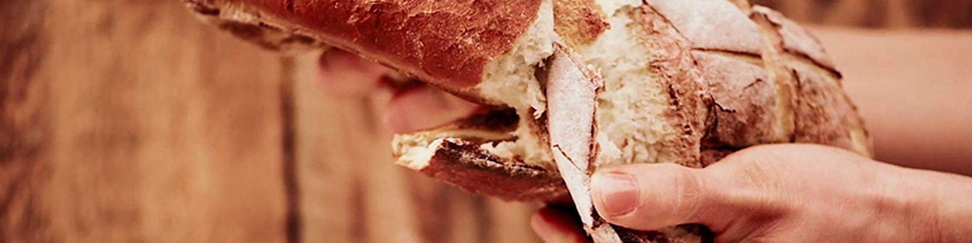 Cata del pan